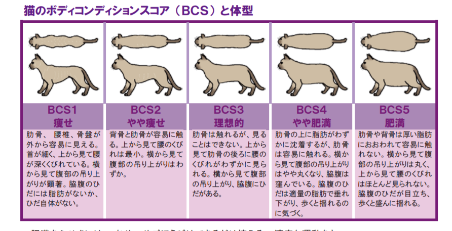 猫の体形でチェックする肥満度
