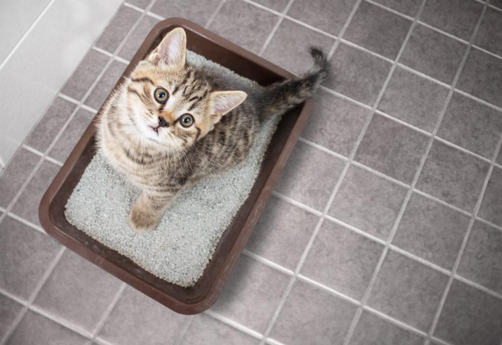 モグニャンと尿路結石を繰り返す猫、膀胱炎の猫には食べさせない