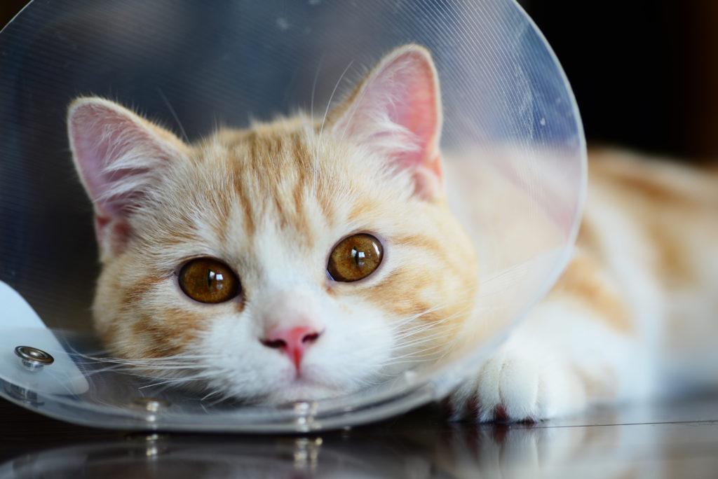 モグニャン去勢・避妊手術後の猫に食べさせる