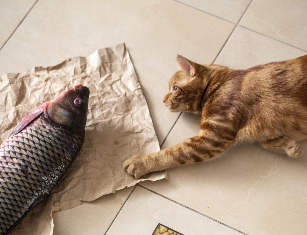 モグニャンおすすめの猫